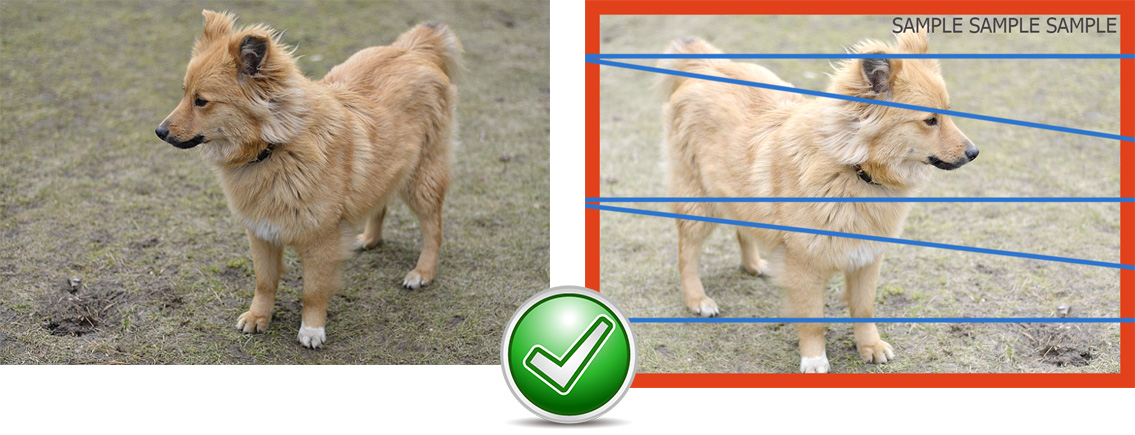 Image Compare/Similarity in dog sample
